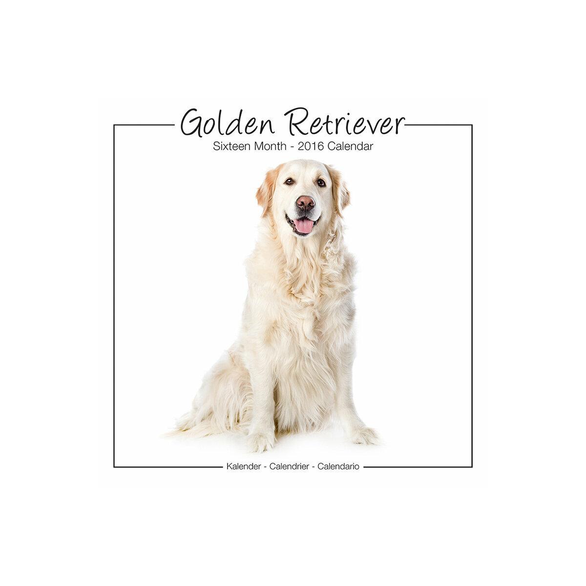 Calendrier Golden retriever 2016